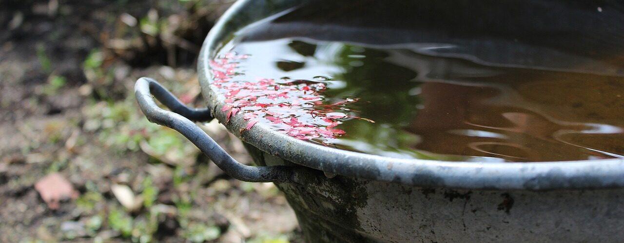 Regenwasser nutzen
